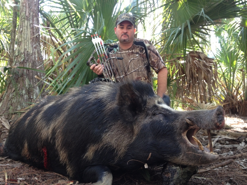 Giant Wild Boar Hunting